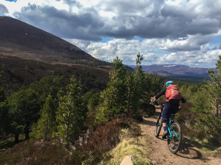 Dropping in to the treeline above Rothiemurchus