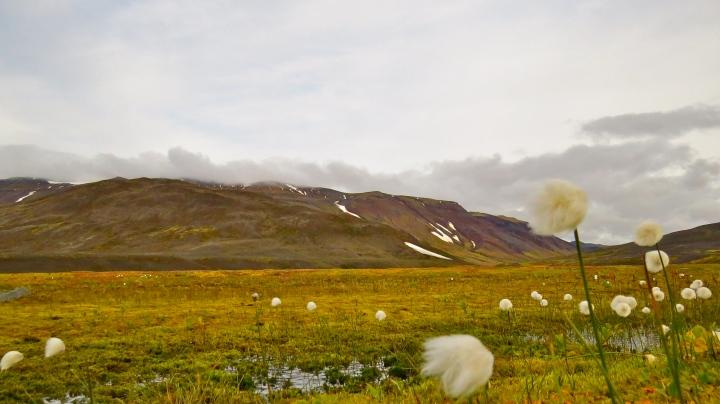 Meadows near Nyidalur.